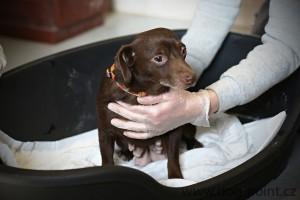Odebraní zanedbaní psi v útulku
